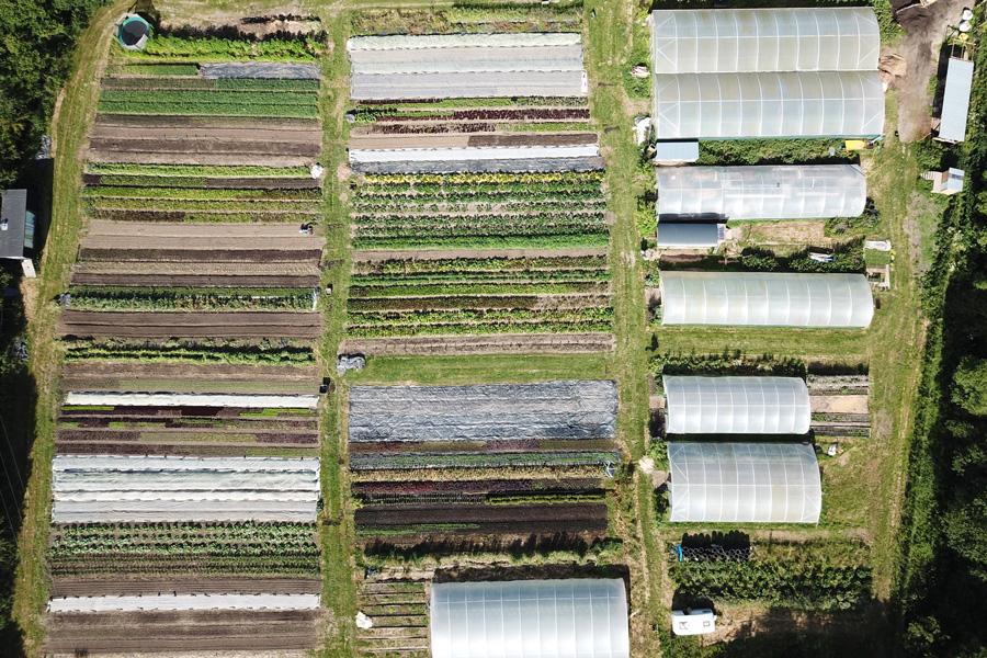 One highly productive hectare: Trill Farm Garden in Devon (Credit: Trill Farm Garden)